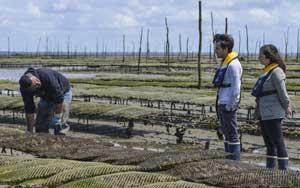Entdecken Sie das Leben eines Austernzüchters
