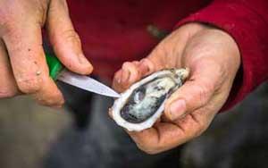 Anleitung zum Auswählen und Öffnen Ihrer Austern