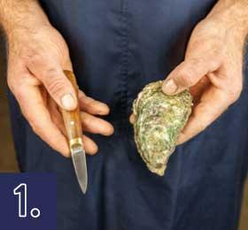 Localice el músculo 2/3 - 1/3 en el lado derecho de la ostra.