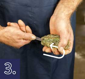 Apertura de la ostra por detrás paso 3