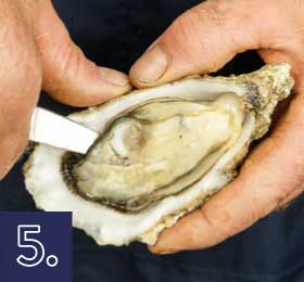 Apertura de la ostra por detrás paso 5