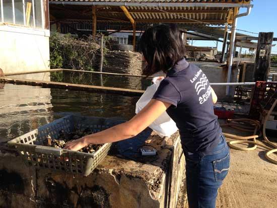 Austernpark der Spitzenklasse