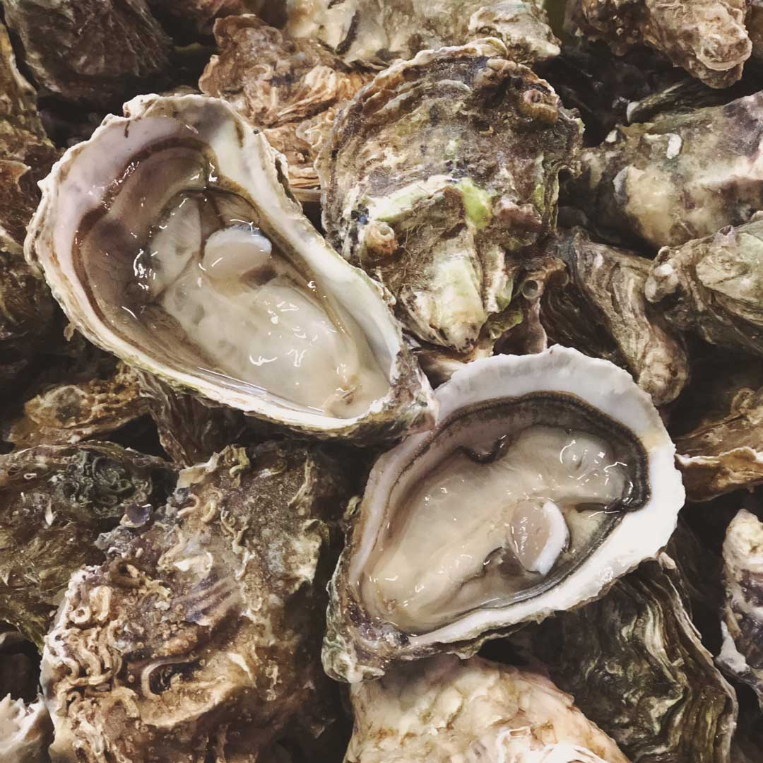 Oysters from the Arcachon Bay