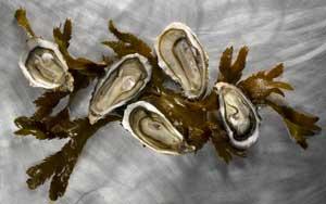 Ideen für Austernrezepte