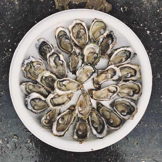 Conservación de las ostras