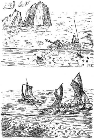 Ilustración de pesca en el mar