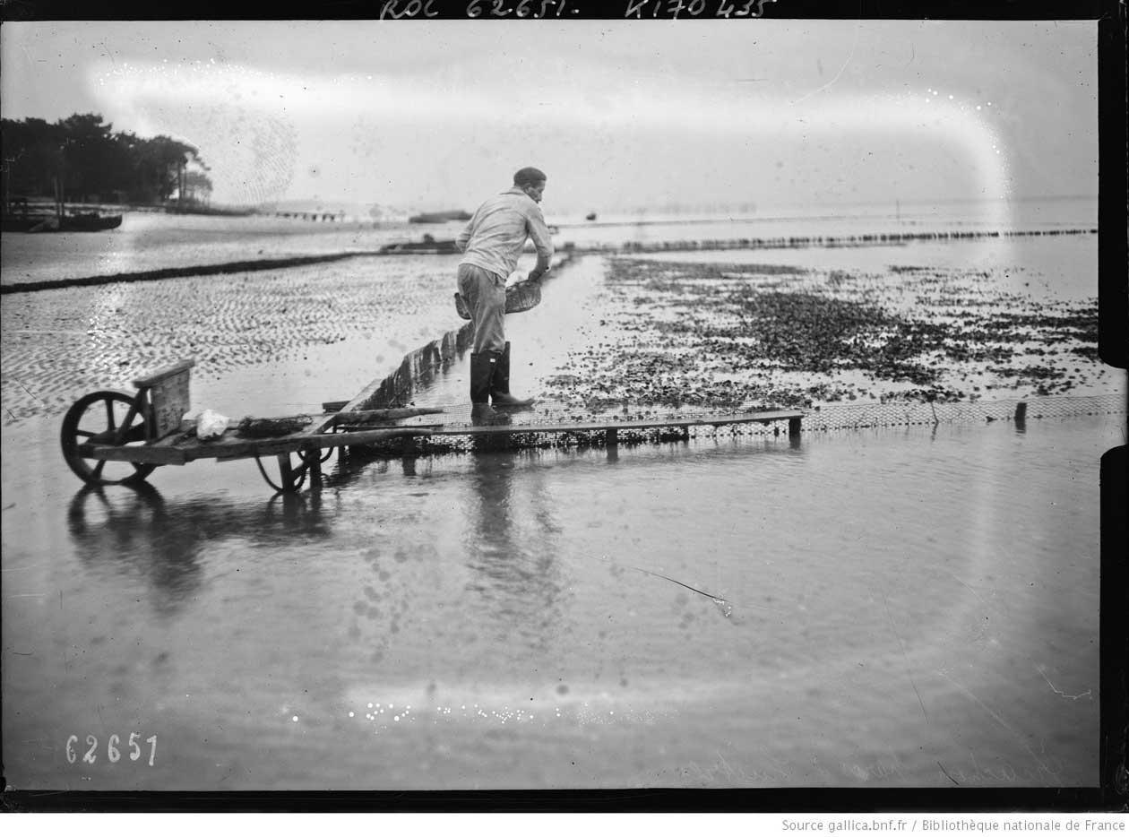 Criadero de ostras de la bahía de Arcachón.