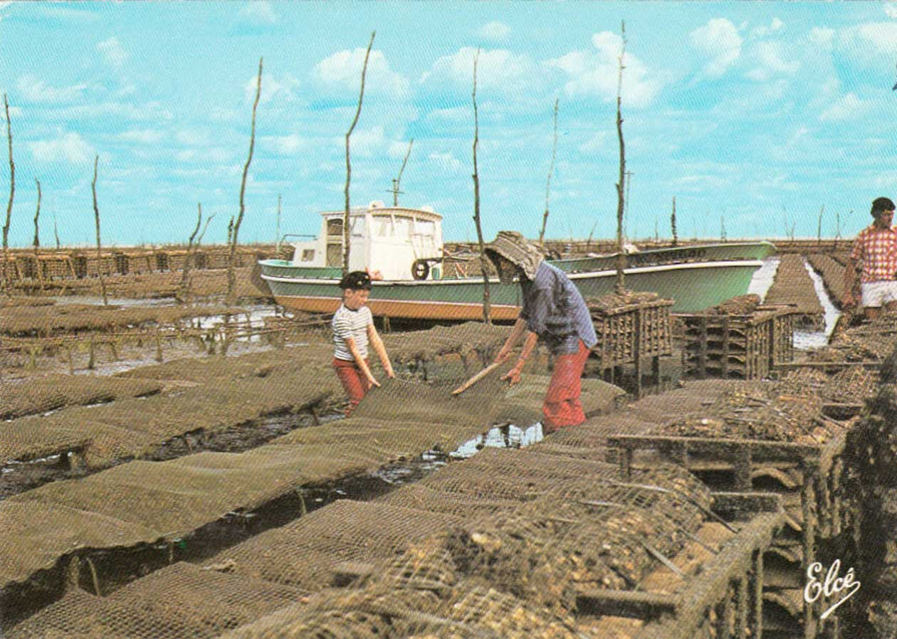 Trabajar en criaderos de ostras